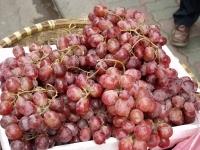 Опухоли поможет предотвратить виноград
