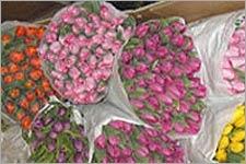 В Беларуси «вянет» не только цветочный бизнес