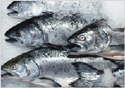 Как власти разрешили продавать «старую» рыбу по новым ценам. А что у соседей?