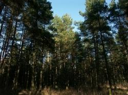 За нахождение в лесах будут штрафовать