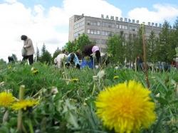 Перед приездом Лукашенко территорию очистили от одуванчиков