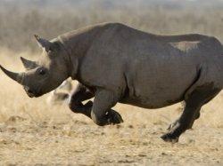 Принц Уильям призвал к защите носорогов