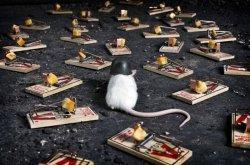 Ученые попробовали пересадить клетки человеческого мозга мышам