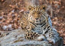 Леопард Лагутенко погиб в ДТП