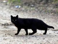 Парламент обяжет минских кошек пройти регистрацию